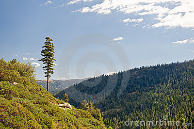 Forested mountains landscape