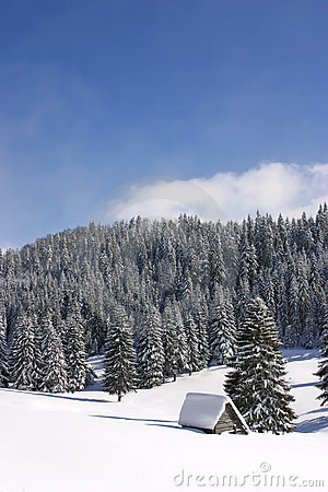 Forested mountains in winter