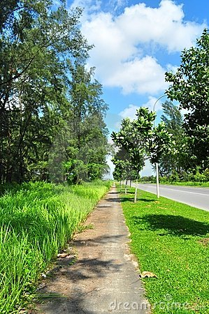 Forested walkway by main road