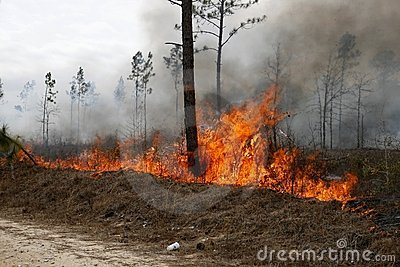 Forestry fire