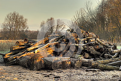 Forestry log pile in HDR.