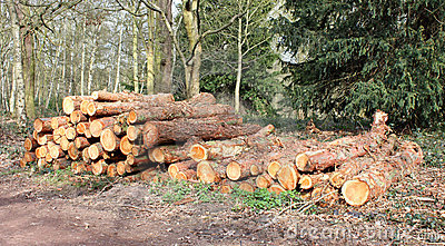 Forestry Logs.