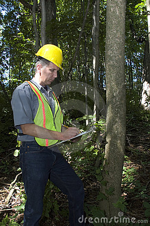Forestry Worker, Man Working in Woods