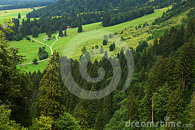 Forests in alps
