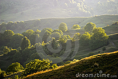 Forests on hills in summer