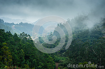 Forests of Madeira island