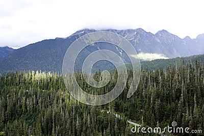 Forests on Mt. Baker