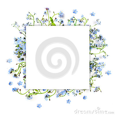 Free Forget-me-not Blue Forest Flowers - Nature Square Background Royalty Free Stock Photography - 71871317