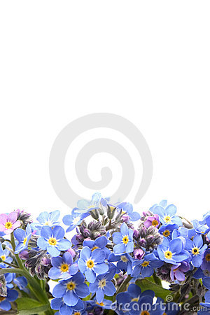 Forget me not border