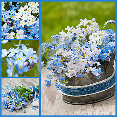 Forget-me-not collage