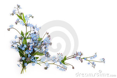 Forget-me-not (floral ornament