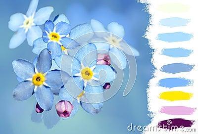 Forget-me-not flower color palette