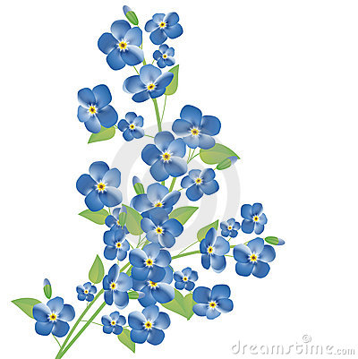 Free Forget-me-not Flowers Royalty Free Stock Image - 22411376
