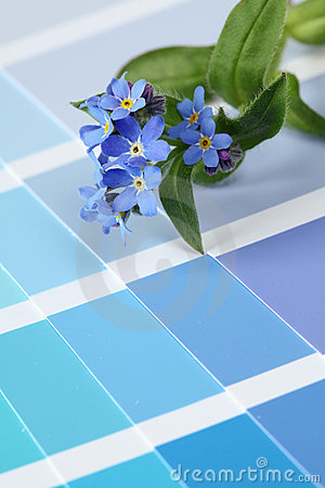 Free Forget-me-nots On Color Swatch Stock Photo - 13690360