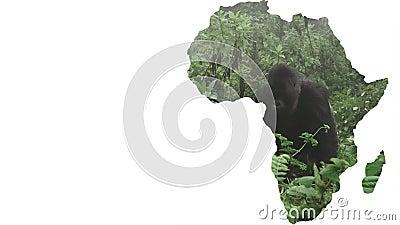 Forma do continente de África com aproximação traseira de prata do gorila vídeos de arquivo