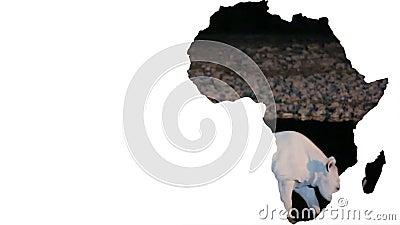 Forma do continente de África com o rinoceronte que anda na noite video estoque