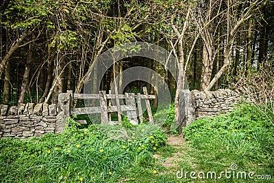 Forrest Gate