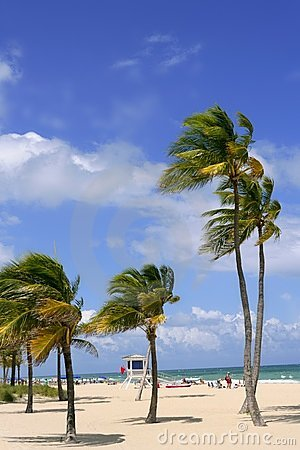 Free Fort Lauderdale Tropical Beach Palm Trees Stock Images - 12223924