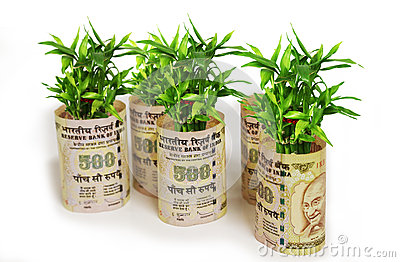 Fortune Plant Saplings Wrapped In Indian 500 Rupees On ...