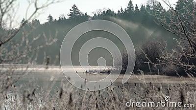 Foschia del lago deer, Columbia Britannica 4K UHD archivi video