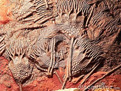 Fossiel