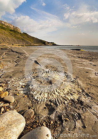 Free Fossil Hunting On The Dorset Coastline Royalty Free Stock Photos - 46785378