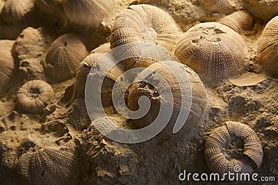 Fossil from prehistory ocean