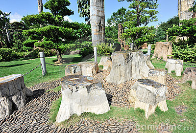 Fossil tree stump