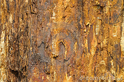 Fossil wood color and texture as iron rust