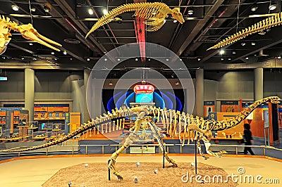 Fossils hong kong museum