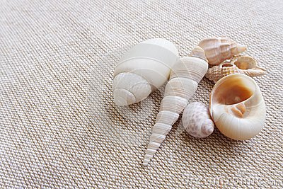 Seashells na bieliźnianym tła wciąż życiu