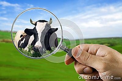 Found a cow