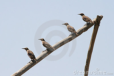 Four birds sitting in a line