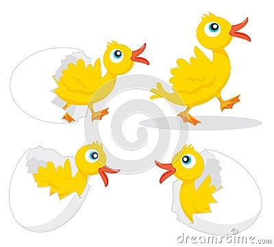Four chicks