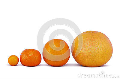Four citrus fruit on a white background