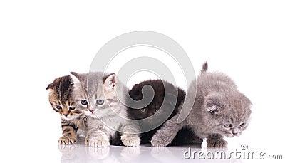 Four curious  kittens