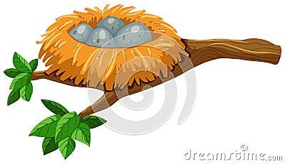 Four eggs in bird nest Vector Illustration