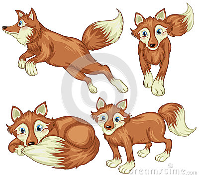Free Four Foxes Stock Photography - 39024572