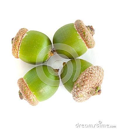 Four green acorn