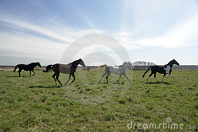 Four horse frolicking in field