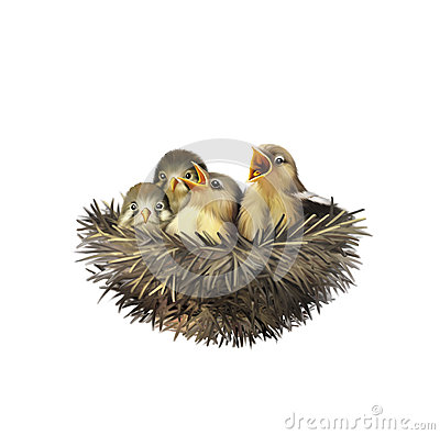Free Four Hungry Baby Sparrows In A Nest Royalty Free Stock Photo - 40129885