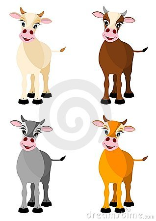 Four isolated illustrated cows