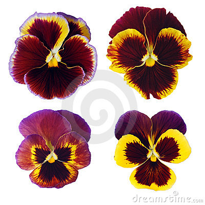 Four Isolated Spring Flowers Royalty Free Stock Images - Image: 15141029