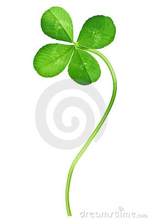 Free Four Leaf Clover Royalty Free Stock Photography - 13136197