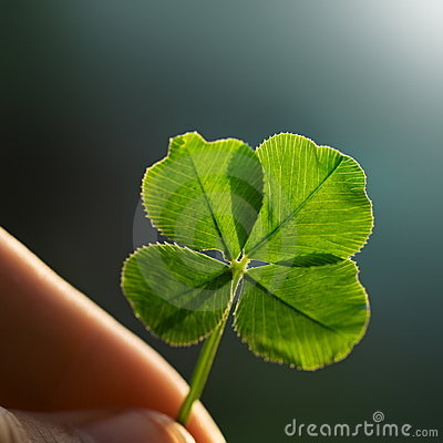 Free Four Leaf Clover Stock Images - 6387594