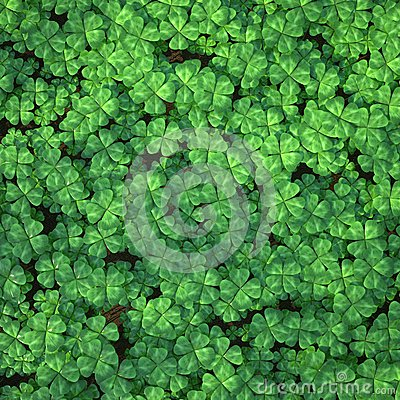 Free Four-leaf Clover Field For Background Stock Photos - 53224743