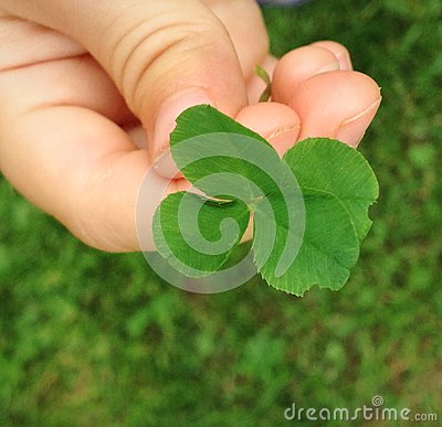Four leaf clover in the Hand of a Child