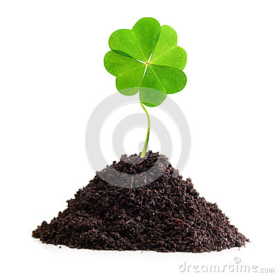 Free Four-leaf Clover Isolated Royalty Free Stock Photos - 32920818