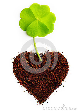 Free Four-leaf Clover Isolated Stock Images - 41226084