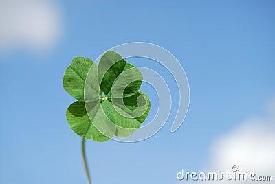 Four leaf clover and sky